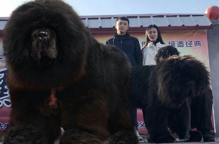 Самая опасная порода собак в мире фото
