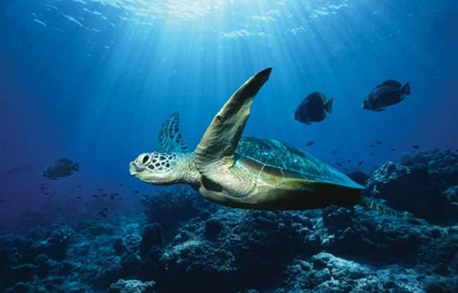 Самый теплый океан на земле