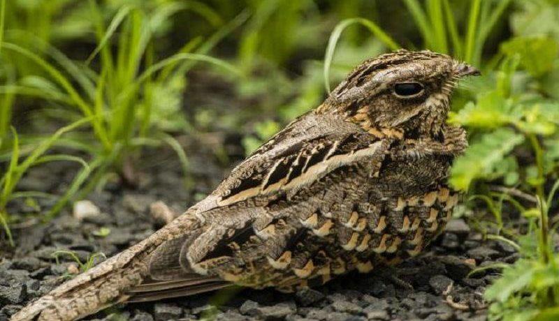 Гнёзда птиц фото