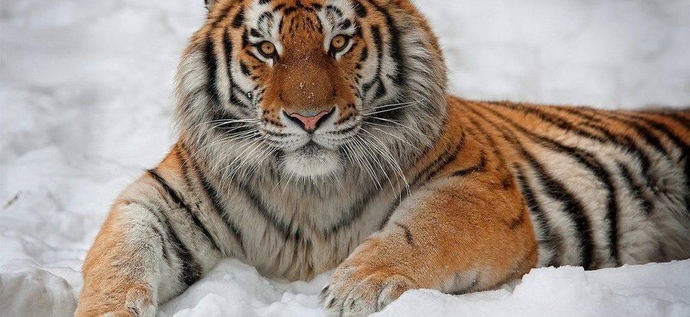 Хищники россии животные