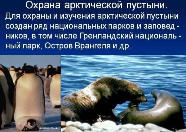 Охрана арктических пустынь