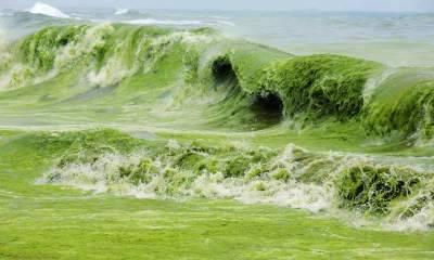 От чего зависит цвет моря