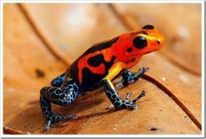 Редкие виды лягушек фотографии и название