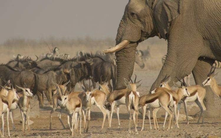 Характеристика субэкваториального пояса африки