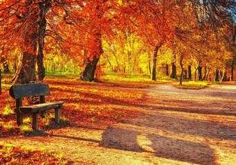 Сочинение для 4 класса про осень
