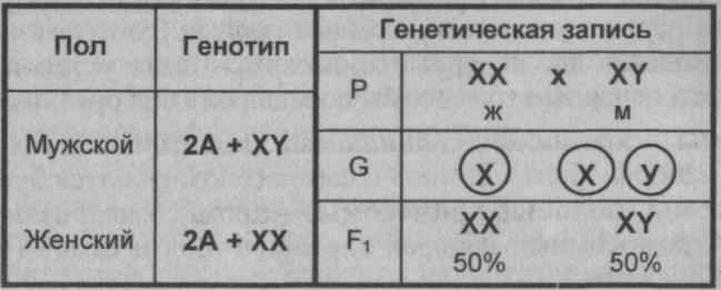 Какая хромосома определяет мужской пол
