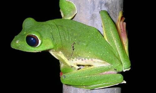 Необычные жабы