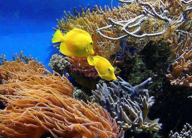 Органический мир тихого океана кратко