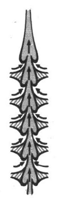 Признаки паукообразных и насекомых