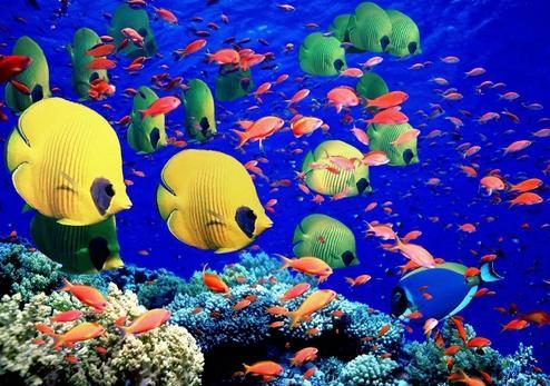 Морские животные названия