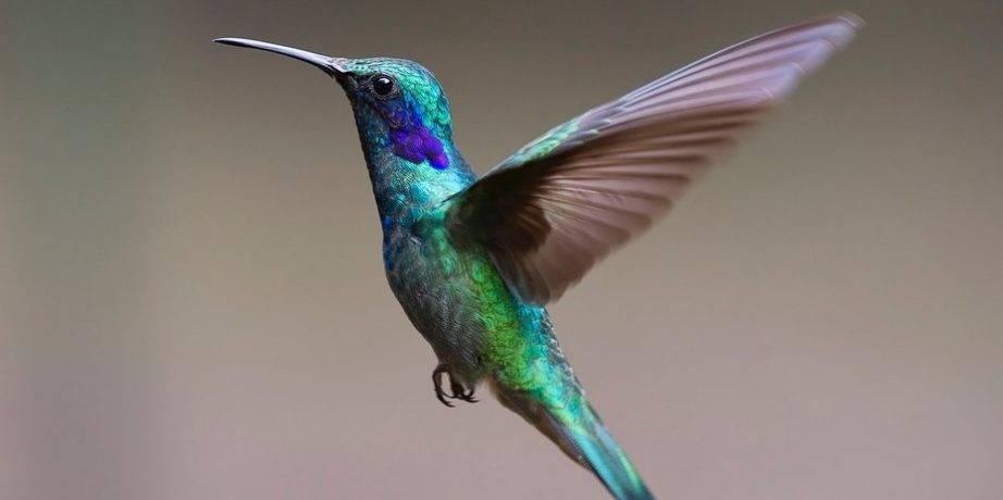 Интересные факты о птицах короткие
