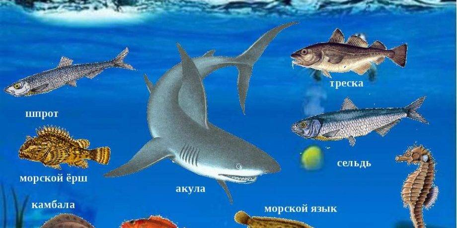 Про морских животных