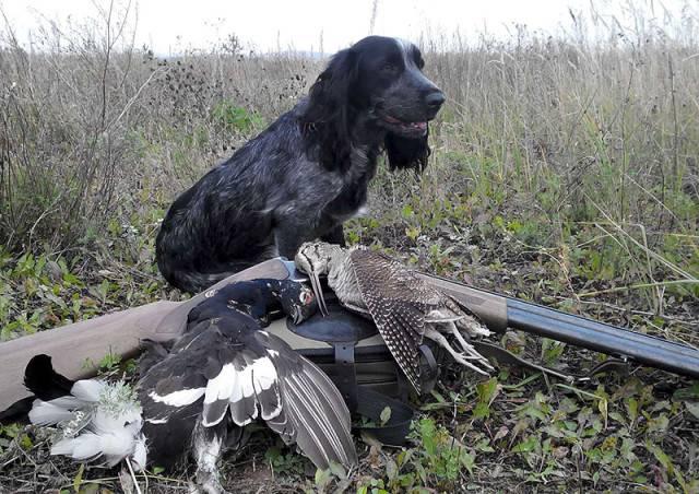 Собаки для охоты на птицу