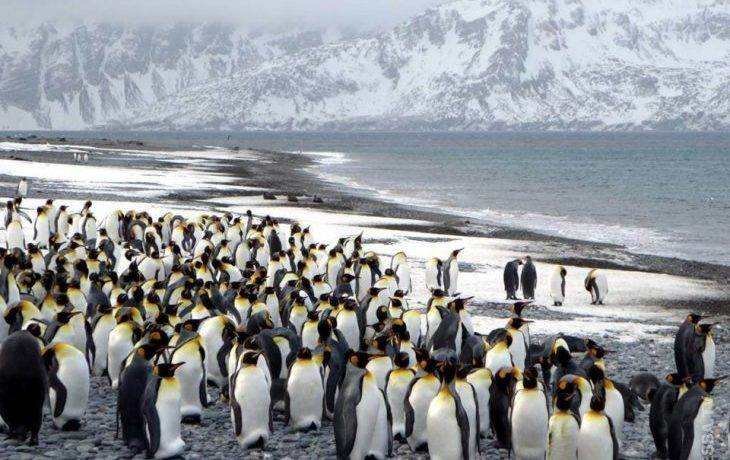 Все о пингвинах для детей кратко