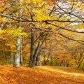 Описание осенних деревьев сочинение