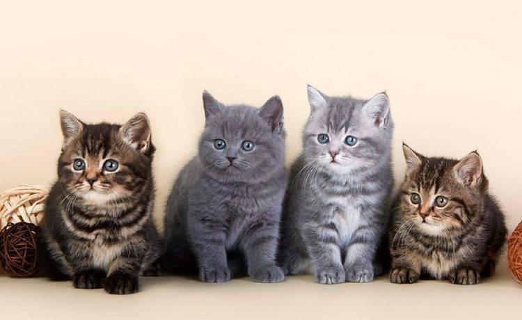 Мраморные котята фото