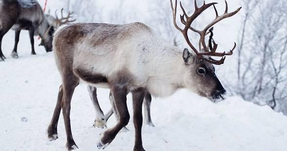 Какие животные обитают в зоне арктических пустынь