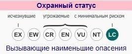 Рысь ареал обитания в россии