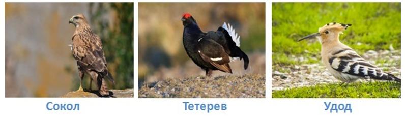 Какие природные зоны есть в россии