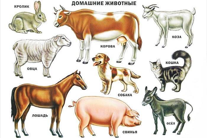Показать животных детям