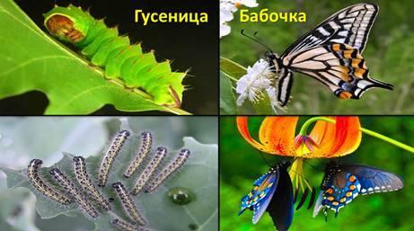 Как размножаются насекомые ответ