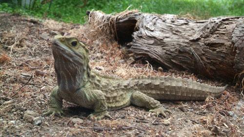 Характеристика рептилий