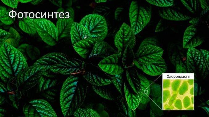Фотосинтез впервые появился у