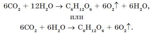 Темновые реакции фотосинтеза протекают в