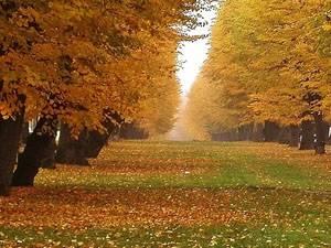 Стихи лермонтова осень