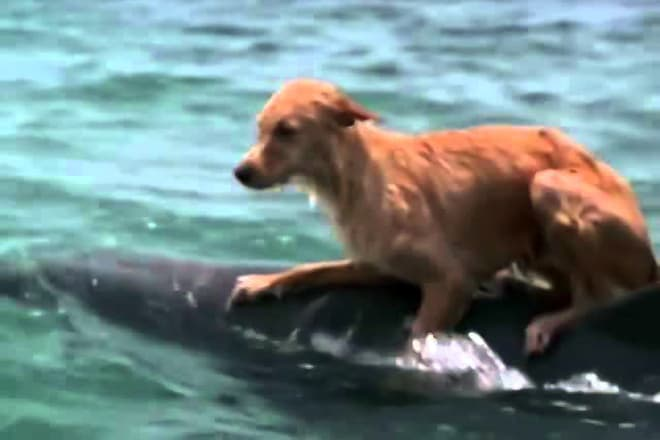 Интересные факты про дельфинов