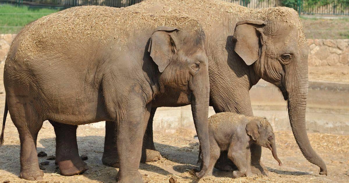 Слон травоядное животное