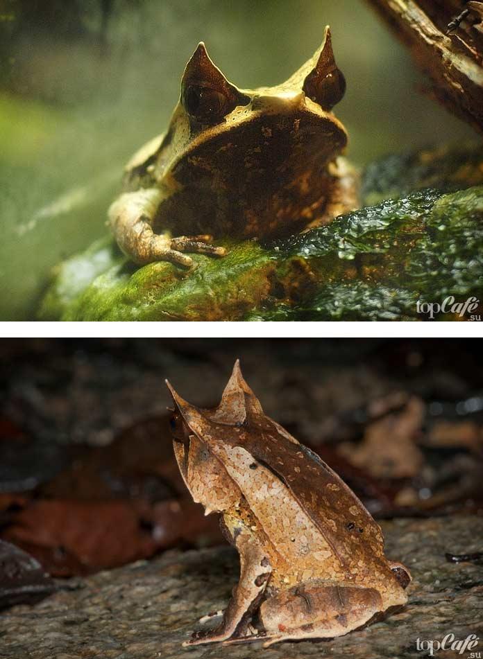 Улыбающаяся лягушка