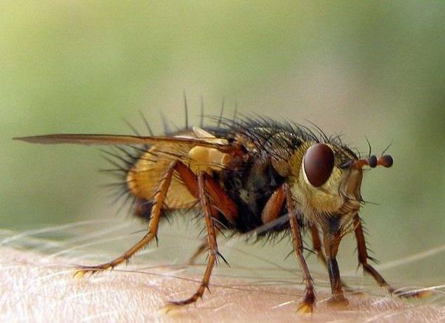 Африканские насекомые