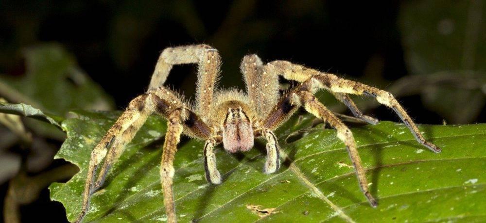 Сообщение на тему пауки