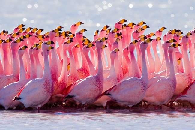 Семейства птиц
