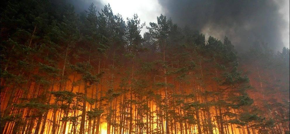 Природные пожары примеры