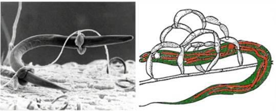 Сходное строение клеток животных и растений свидетельствует