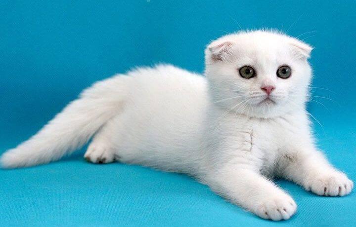 Клички для белого кота