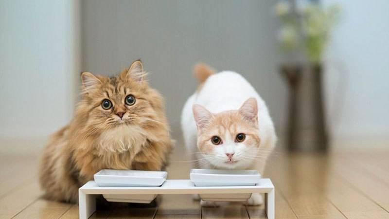 Можно ли котятам молоко