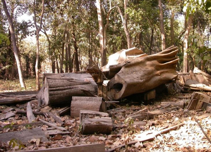 Зона тропических лесов