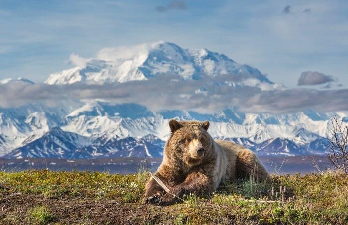 Медведь травоядное или хищное животное