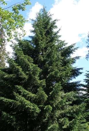 Растения тундры и лесотундры