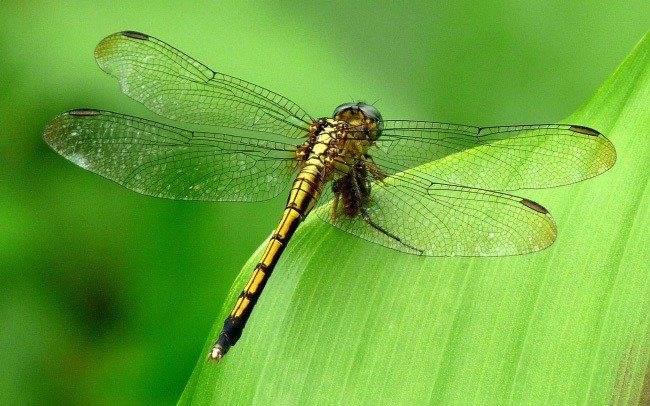 Самое быстрое насекомое в мире