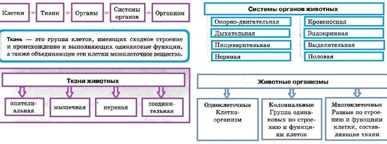 Систематика животных таблица с примерами