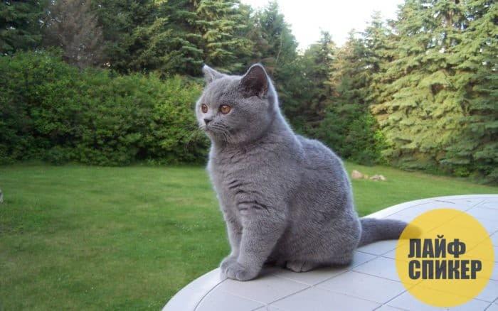 Самые красивые кошки в мире топ 10