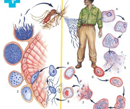 Организмы паразиты примеры