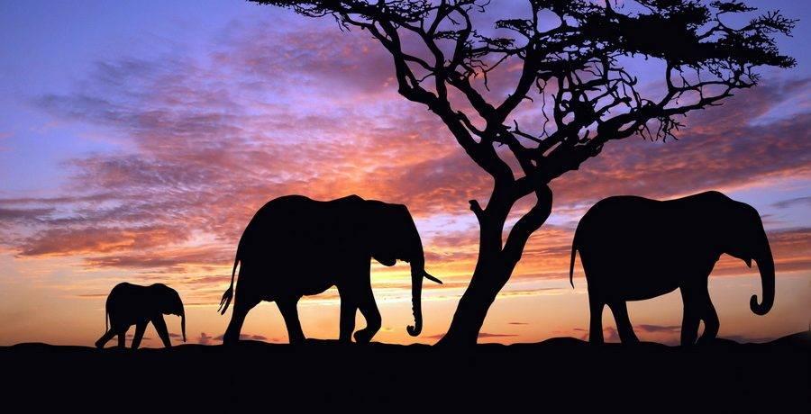 Проект африканская саванна