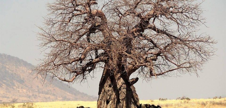 Растительность тропических пустынь