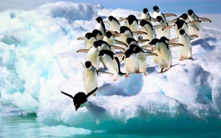Есть ли у пингвинов зубы