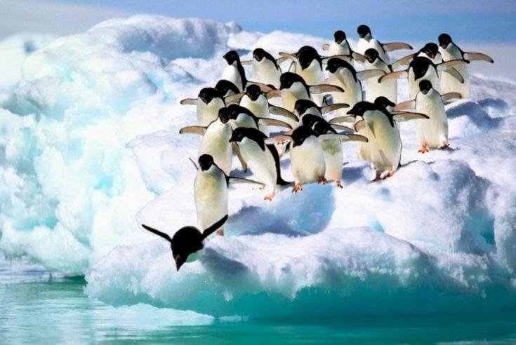 Рассказ про пингвинов